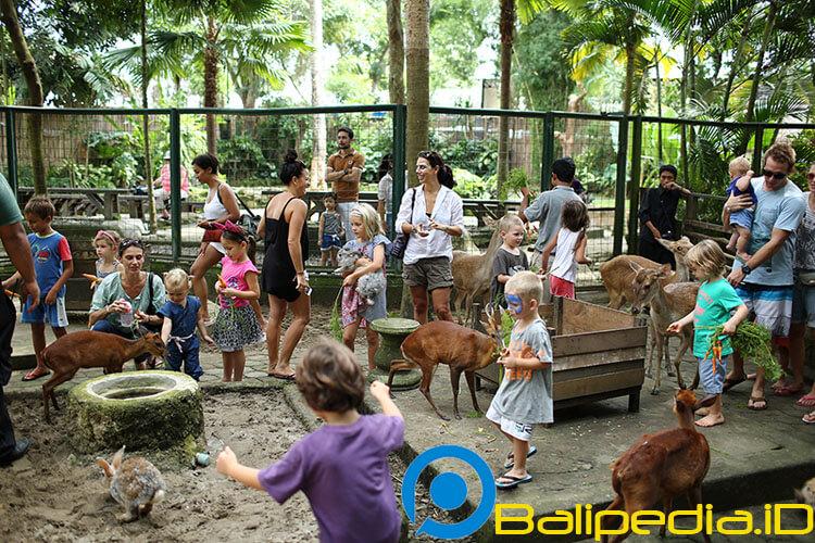 Petting Bali Zoo