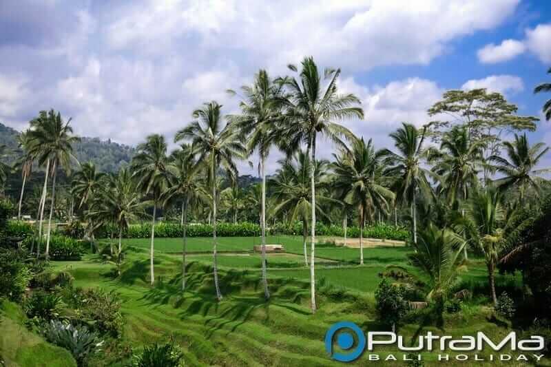 Terasering Secret Garden Village Bali