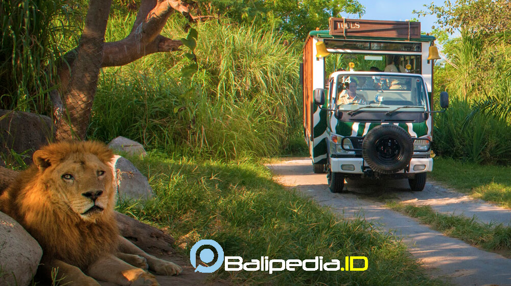 Bali Safari Journey Trip